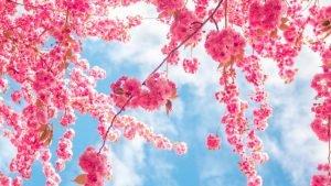 Equinozio di primavera, significato spirituale